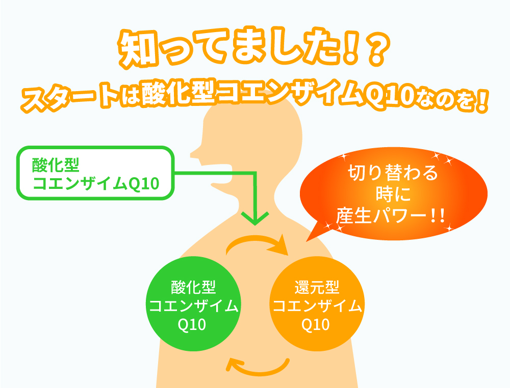 体内吸収は酸化型コエンザイムQ10がスタート